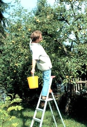 Obstpflücken (Foto: Das Sichere Haus DSH)